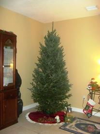 tree11.JPG